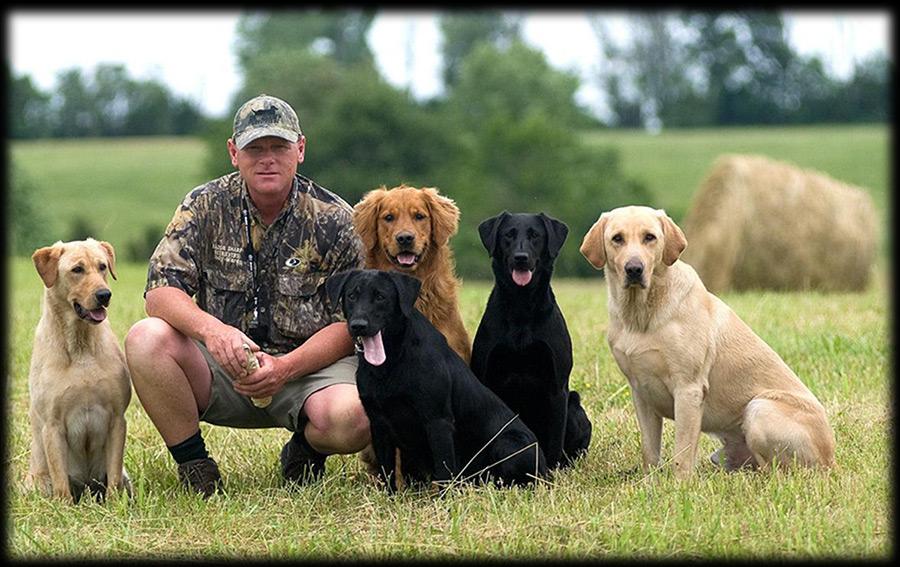Razor Sharp Retrievers |Labrador Retriever Training